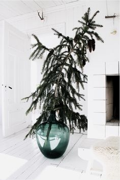 Giant Pine Branch via Julie Carlson holiday, charlie brown christmas, christma tree, glass, branch, christmas decorating ideas, modern christmas, christmas trees, cherry blossoms