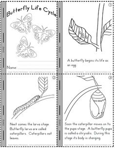 Check out our worksheets to help students learn about the butterfly's life cycle stages.