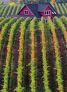 Sokol Blosser Vineyards - Yamhill County, Oregon