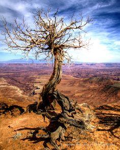 Lonely tree - Canyonlands National Park, Utah