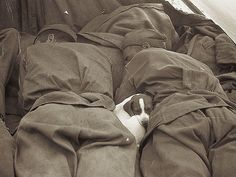 A tiny puppy sleeping comfortably between Russian soldiers. (1945)