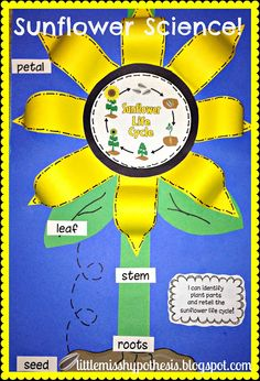 Little Miss Kindergarten - Lessons from the Little Red Schoolhouse! Product update! YAHOO sunflower science added!