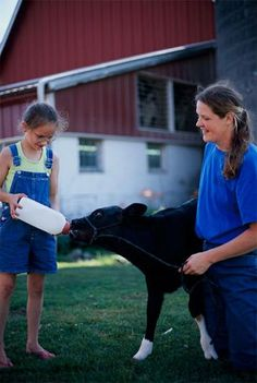 8 tips for raising bucket calves | Living the Country Life | http://www.livingthecountrylife.com/animals/livestock/8-tips-raising-bucket-calves/