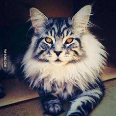 favorit cat
