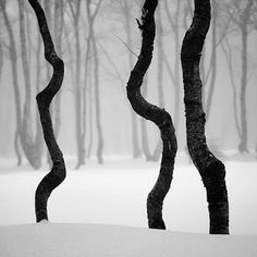 These #trees looks as if they're dancing in the snow! #TreePhotos