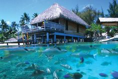 Hotel Bora Bora, French Polynesia. This is the bungalow we stayed in on our honeymoon.
