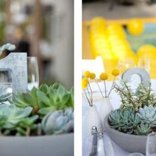 love this. succulents in pots.