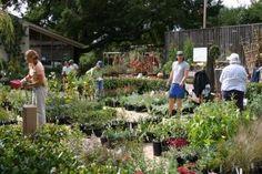 2014 Annual Fall Native Plant Sale at Santa Barbara Botanic Garden: September 27 to November 2, 2014!