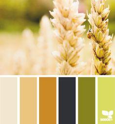 wheat hues