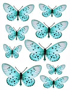 Many many free butterfly printables