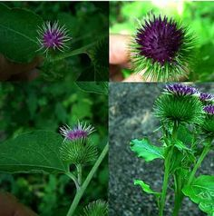 27 medicinal plants for the garden