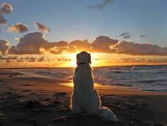 even the dog loves sunsets here  Two of my favorite things.....