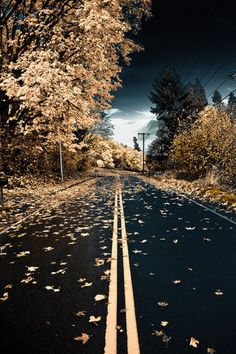 . autumn road, autumn leaves, beauti, beauty, storms, place, roads, photography, falling leaves
