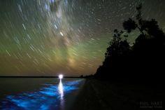 A Luminous Night