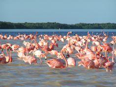 Wildlife sanctuary Los Flamencos, La Guajira, Colombia