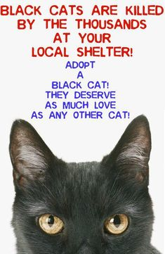 BLACK CATS DESERVE AS MUCH LOVE AS ANY OTHER CAT - DON'T DISCRIMINATE
