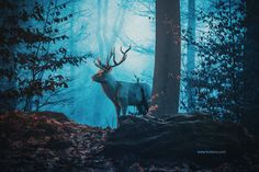Digital art selected for the Daily Inspiration #1879
