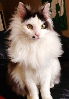 Meet Buttons the cat. He's better than you.