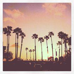 palm trees, long beach