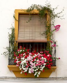 A Lot Of Flowers On The Window