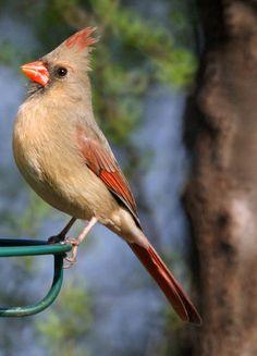 Backyard Birds | Common Backyard Birds in New Jersey in the Spring- New Jersey Bird ...