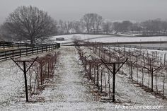 Chrysalis Vineyards: A Warm Winter