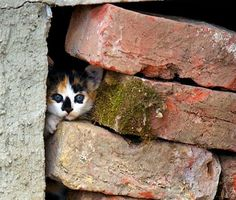 ozopanda:  Entre muros