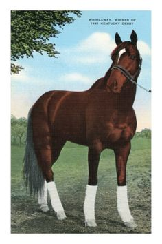 Whirlaway 1941, Kentucky Derby Winner Vintage Poster
