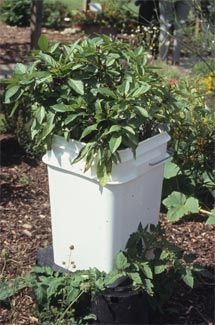 Types of Containers - Making Herb and Vegetable Containers - Successful Container Gardens - University of Illinois Extension