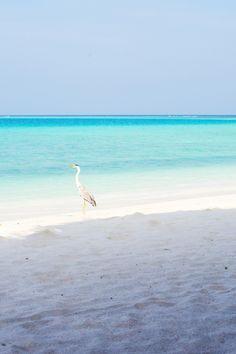 Republic of the Maldives