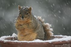 These Animals Don't Care That It's Freezing Outside -- Find out how species stay warm in the cold winter weather. Plus, some cute snowy wildlife photos.