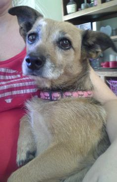Babe  is an 8 year old chihuahua mix. She is not fully housebroken but working  on that. She does have anxiety. Would be best in a home with only one  other dog. Will bark at cats sometimes, but other times she ignores  them. Must have fenced yard....