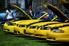 Come to one of our car shows like the Yellow Mustang Show  #yellowmustang