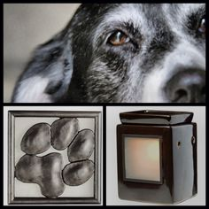 Scentsy loves dogs too!