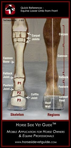 This is a great at-a-glance reference! Horse Side Vet Guide - Quick Reference - Equine Lower Limb Anatomy #horse #horses #arabianhorse #arabians