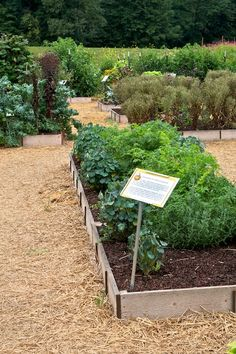 why can't my garden paths look like this?     Seed Savers Exchange