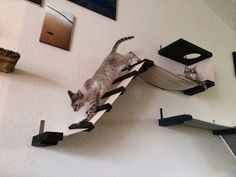 Cat playplace equipped with a ladder by CatastrophiCreations. #cats #CatClimb #CatBridge