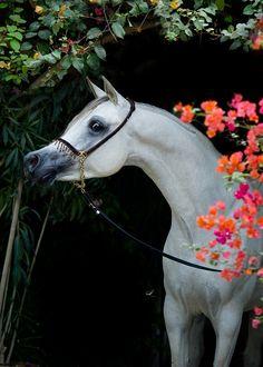 striking Arabian beauty