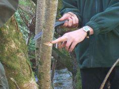 Penarth Woodcraft Folk - Bushcraft training