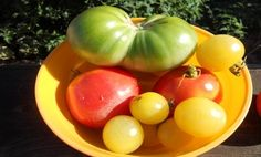 5 Mistakes to Avoid When Growing Tomatoes
