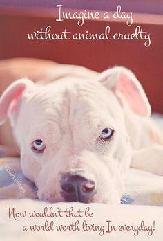 no cruelty