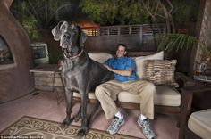 Man, that dog is huuuuuge!