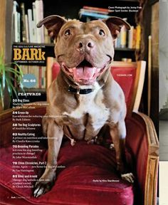 Stella was rescued during a drug bust in Michigan.  She was completely worn down from cruel treatment and too many litters.  Now she lives a much calmer, happier life, and even poses for magazine cover shoots.