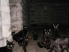 Lots and lots of black cats. Beautiful. Incensewoman