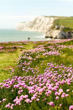 Isle of Wight beaches, ireland, dream, peaceful places, natur, sea, beauti, travel, flowers