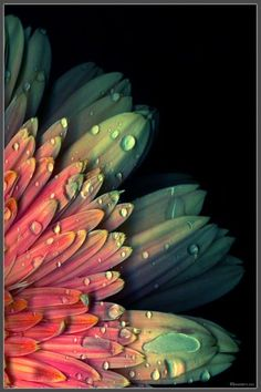 photography flower, water drops, color combos, daisi, rain drops, dew drops, flowers, water droplets, flower photography