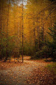 Autumn Trail through the Dyea Campground. Alaska rocks!