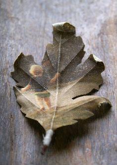 memori, photograph, family trees, famili, leav