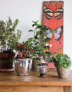 Basta uma mesa vazia próxima à janela para montar um jardim em vasos dentro de casa. O melhor é que as plantas podem mudar de lugar. Produção de Suzel Fontes