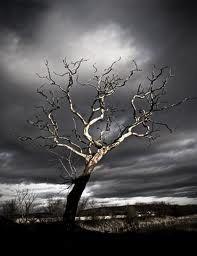 Dead tree pic